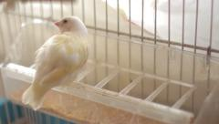 Finch Stock Footage