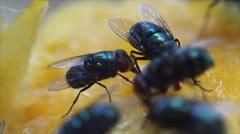 Housefly crawl and suck mango juice - stock footage