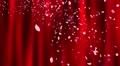 Sakura petals falling 3 Jkb2 4K Footage