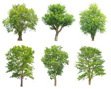 Trees Collection isolated on white background Stock Photos