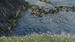 4K Purple and yellow flowers in grass at cliff with sea and rocks in background Stock Footage