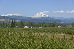 Mt. Adams and Hood River valley Oregon. Stock Photos
