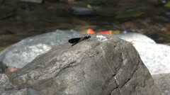 Damsel Fly Next To A Jungle Stream Stock Footage