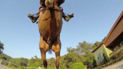 Stock Video Footage of Horse jumping hurdle at sunset,