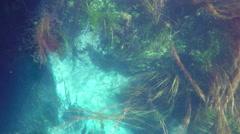 Boat trip, reeds, bizarre underwater of azmak river, turkey. Stock Footage