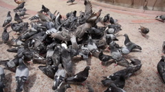 FEEDING PIGEONS on public park - San Juan - Puerto Rico - stock footage