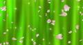 Sakura petals falling 3 Ekg 4K Footage