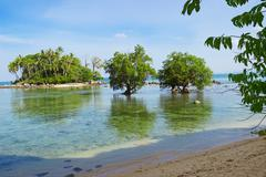 Tree mangrove in area of low tide. Thailand - stock photo