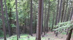 Hillside hiking pan mountain range forest Harz Ilsetal Stock Footage