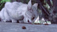 Cat vs. ants 2 Stock Footage
