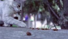 Cat vs. ants 3 Stock Footage