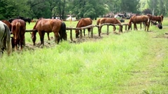 Groups of horses Stock Footage