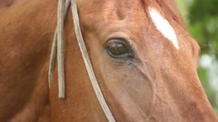 Eye of a horse Stock Footage