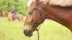 Head a brown horse Stock Footage