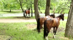 Playful horse Stock Footage