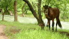dissatisfied horse - stock footage