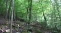 Rough hillside nature in mountain range forest Harz HD Footage