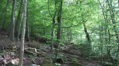 Rough hillside nature in mountain range forest Harz Stock Footage