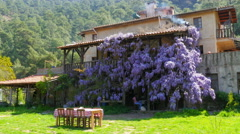 lovely village house, walls full of flover - stock footage