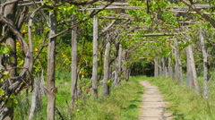 Vineyard footpath, passing through path Stock Footage