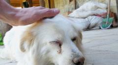 Stock Video Footage of cataract dog eye
