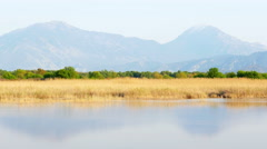 Reed bed by lake in nature Stock Footage