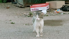 Feral cat in the street Stock Footage