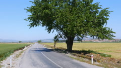 Empty road by huge tree in natural contryside, Stock Footage