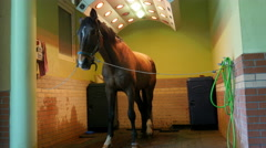 Horse health care in stable, washing, cleaning and solarium Stock Footage