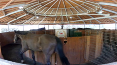 Horses running in walking exercise machine in stables Stock Footage