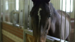 Horses in stable, interior Stock Footage