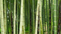 Bamboo tree forest Stock Footage