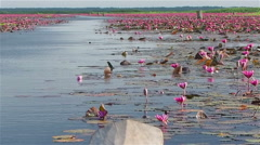 View at Red Lotus Sea in Thailand Stock Footage