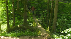 Stock Video Footage of man crossing bizarre bridge tree in batumi botanical garden