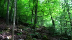 Dreamy hillside nature in mountain range forest Harz Stock Footage