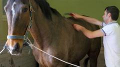 AKYAKA - TURKEY: Horse washing, cleaning, solarium Stock Footage