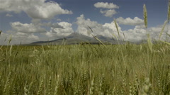 Wheat fields and mountain in rural Turkey - stock footage