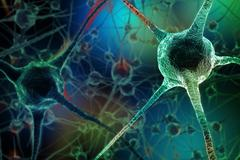 Realistic rendering of neurone - on the green background Stock Illustration