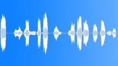 Sheep Sound Sound Effect