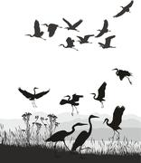 Herons on the shores of Lake - stock illustration