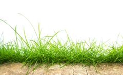 Fresh spring green grass panorama isolated on white background. Stock Photos