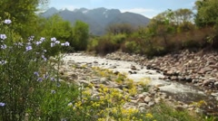 River and flowers wide - stock footage