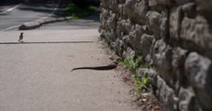 Stock Video Footage of Wild snake on sidewalk slithering around 4k