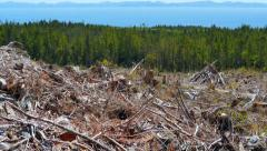 4K Clear Cut Deforested Area, Tilt Shot, Forest Trees Ocean and Mountains in Bac - stock footage