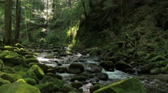 Idyllic forest scenery with creek and cascades #1 Stock Footage