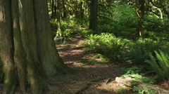 Pacific Northwest Forest dolly shot Stock Footage