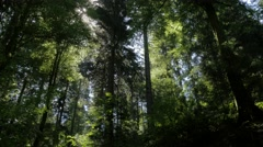 Forest scene with twinkling sun Stock Footage