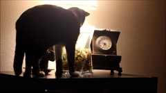 Dark room and a cat drinking from fish bowl Stock Footage