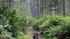 Dog run away quickly in the woods Stock Footage