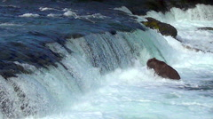 Brown Bear Fishing Misses Several Salmon & Has Many Jumping Nearby Stock Footage